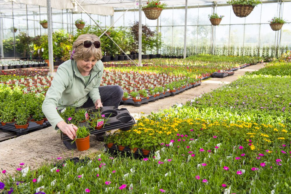 Four Reasons to Buy Plants from Local Nurseries