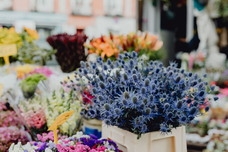 Things You Must Know While Choosing the Best Online Flower Shop